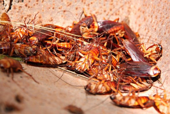 Дезинcекция от тараканов